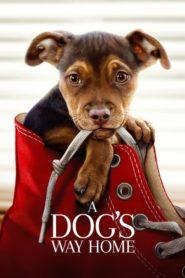 A Dog's Way Home (2019) dublat în română