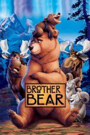 Fratele urs (2003) dublat în română